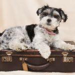 immigrer au Quebec avec son chien