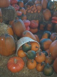 Citrouilles Halloween Quebec